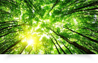 Ebuyer.com - The Environment